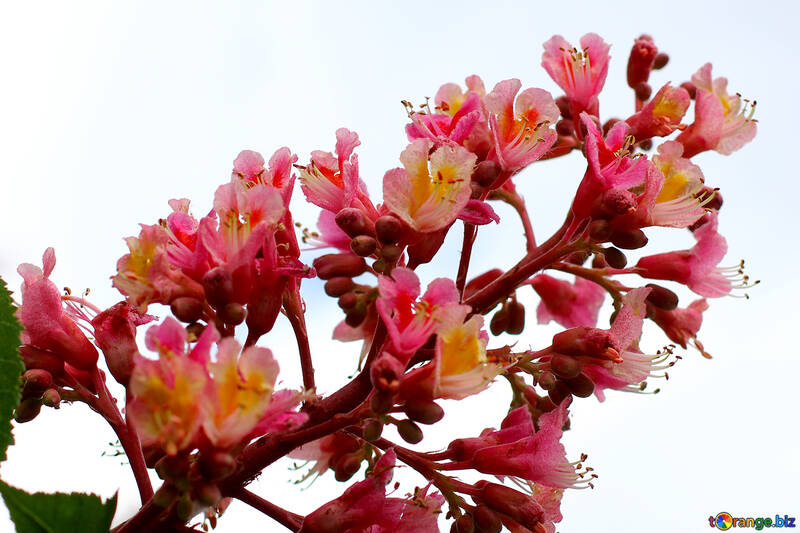 Spring Flower background №37652