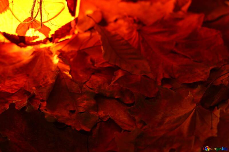 Осенние обои на рабочий стол №37953