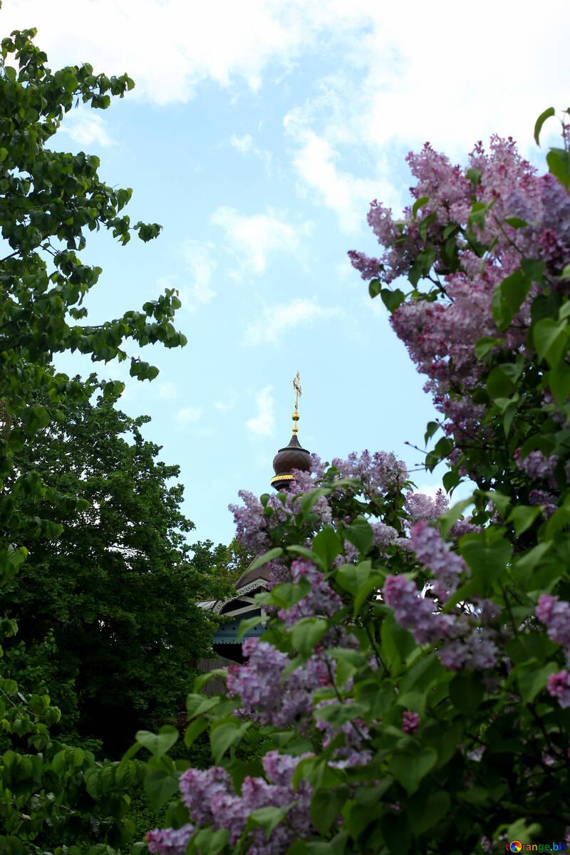 Церква в парку №37590