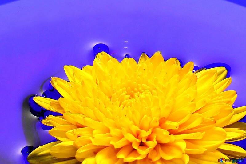 Ukrainische Blume №37279