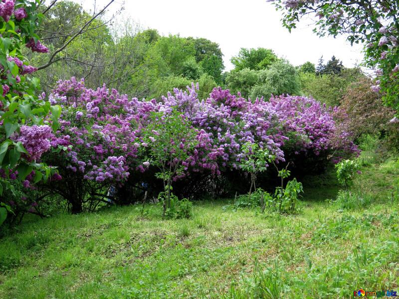 Hermoso jardín en primavera №37305
