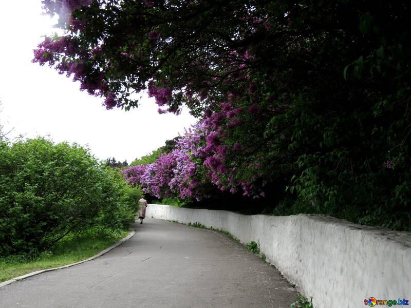 The road in the flower garden №37311