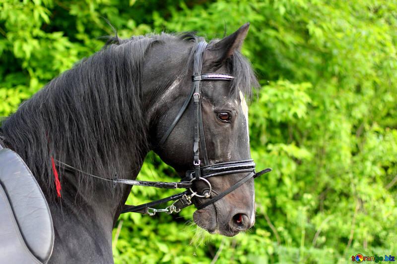 Красивый конь №37264