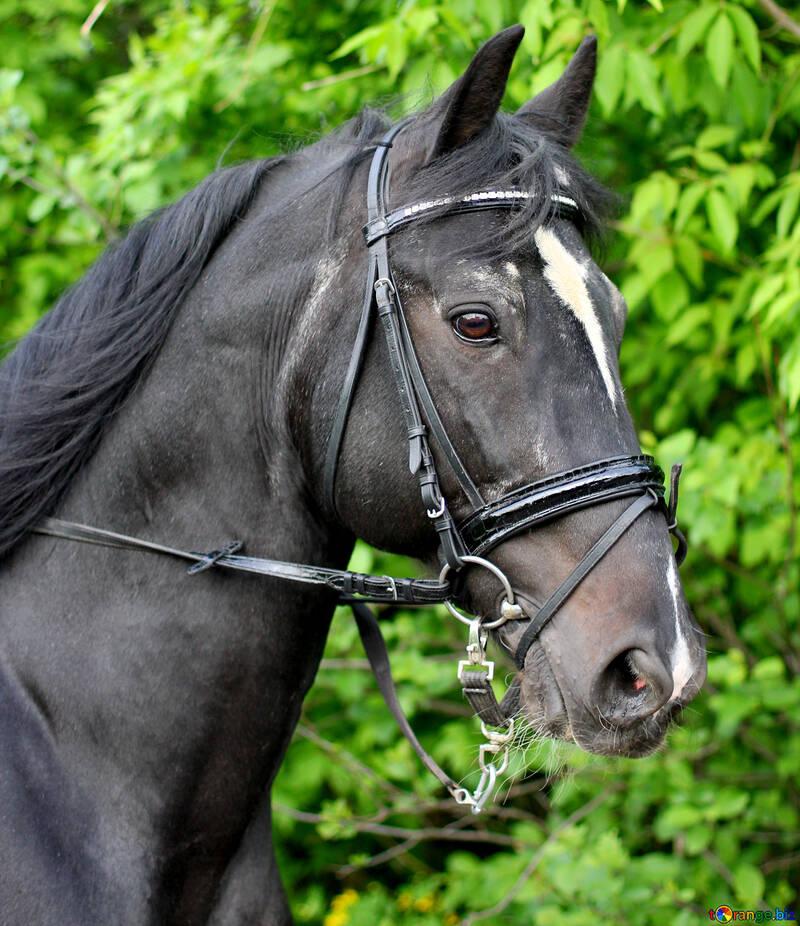Портрет коня №37266