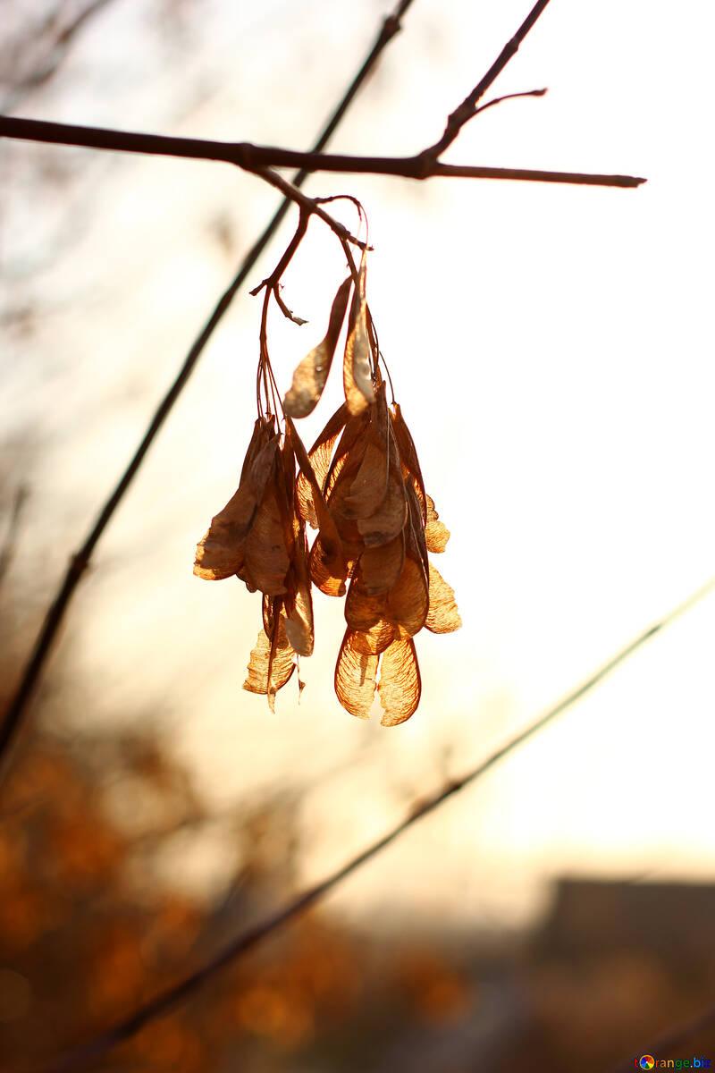 Late autumn №37218