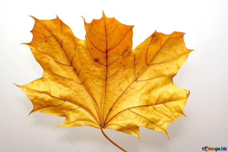 Dry leaves №37253