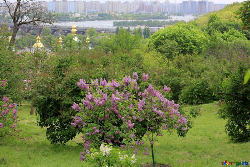 Parque de la ciudad de Lila №37578