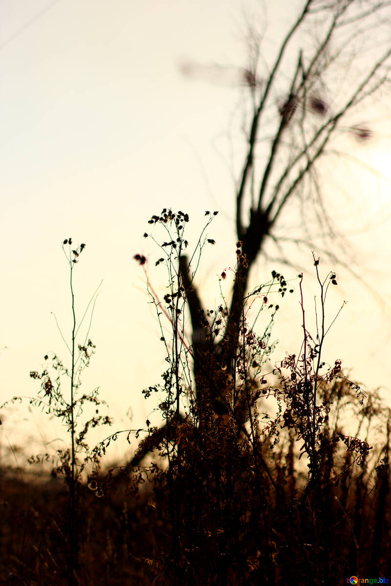 Autumn tree №37220