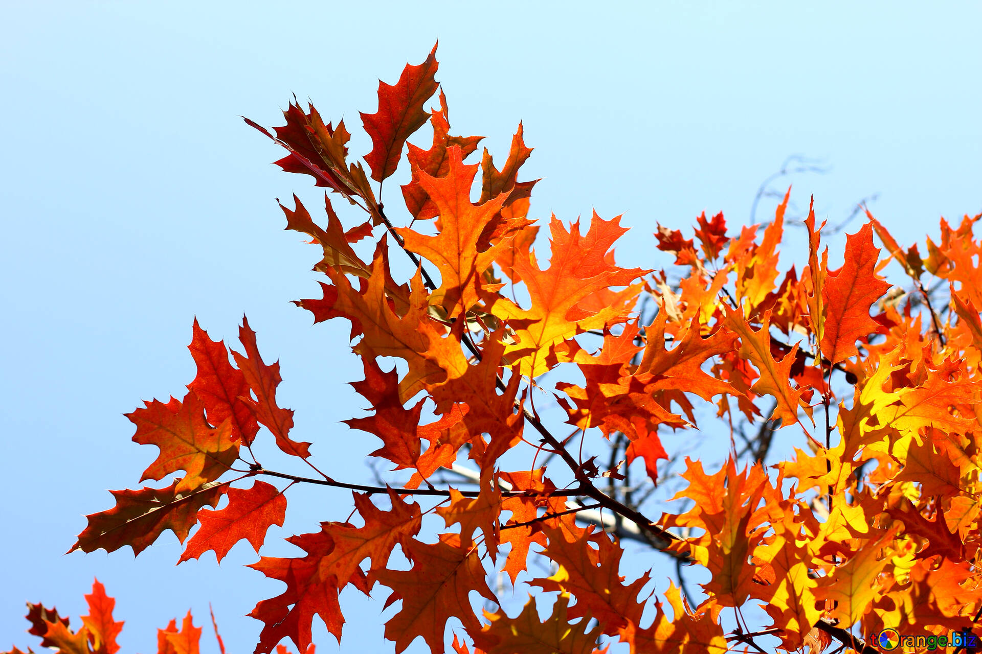 Background For Desktop Autumn Desktop Wallpapers Leaves 38532