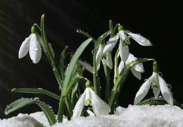 Fiori d`arte di clip nella neve №38361
