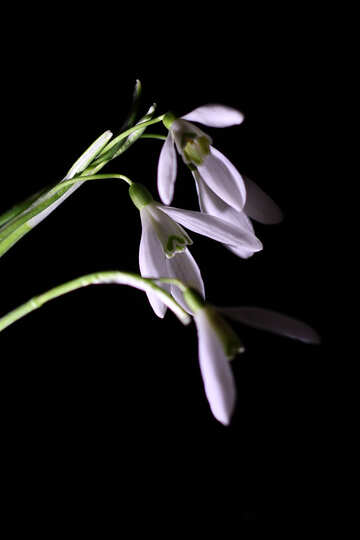 Flowers closeup №38413