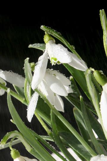 Snow flowers №38256