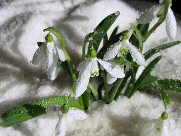 Дикие цветы №38390