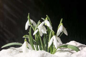 All`inizio della primavera №38252