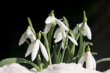 All`inizio della primavera №38261