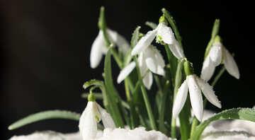 Photos of spring №38264