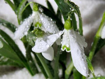 White flower №38389