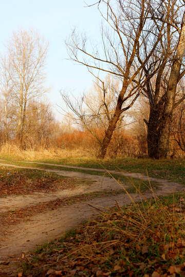 Autumn road №38631
