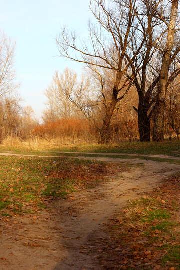 Road autumn day №38633