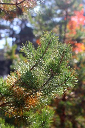 Leaves, needles №38553