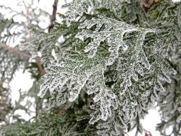 Frost needles №38163