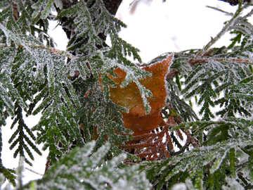 Winter trees №38176