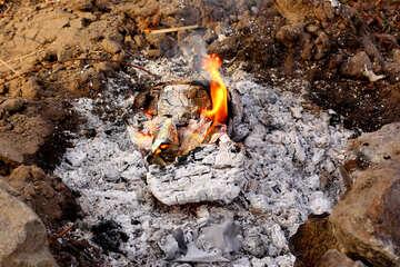Bonfire  №38609
