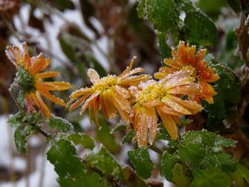 Frozen flowers №38123