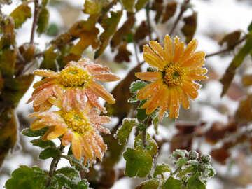 Last autumn flowers №38124