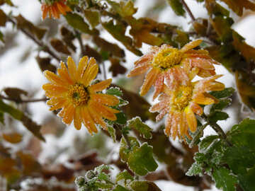 The flowers freeze in winter №38126