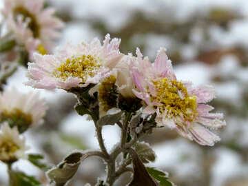 Frost flowers №38115