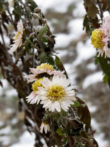 Winter flowers №38128