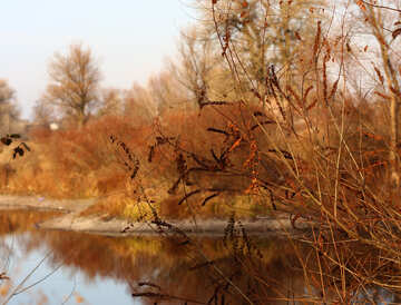 Lago del bosque en otoño №38626