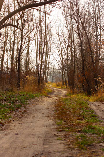 Forest road №38636