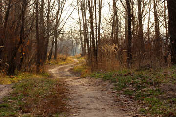 Road in forest in autumn №38635