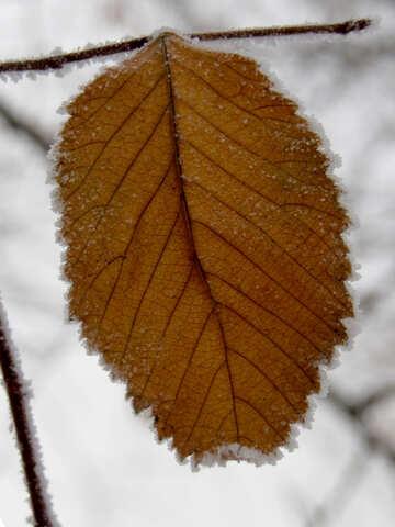 Leaf №38141