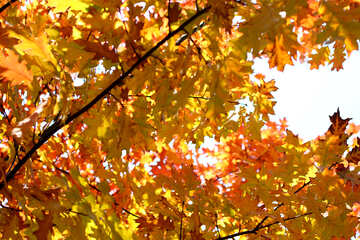 Beautiful autumn picture №38536