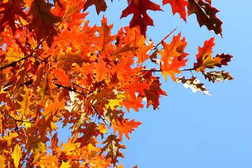 Autumn picture №38531