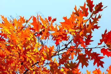 Le foglie sulla copertina di Facebook №38533