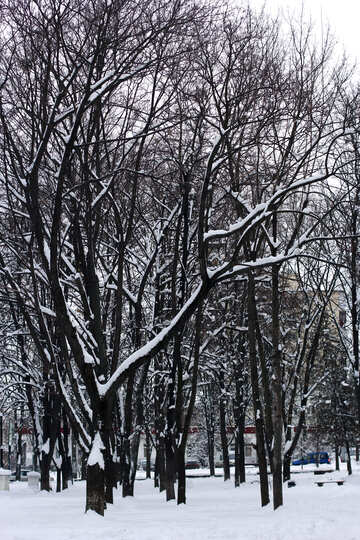 Trees in the snow №38970