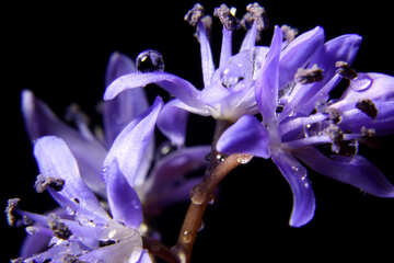 Macro flower №38996