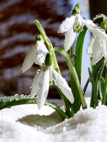 Frühling Bilder März №38367
