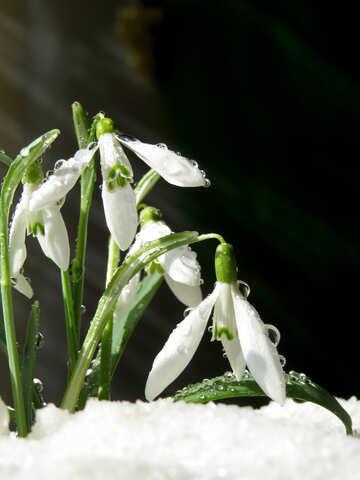 Frühlings-Hintergrund №38366
