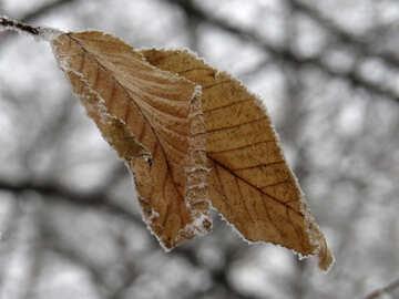 Winter leaf №38144