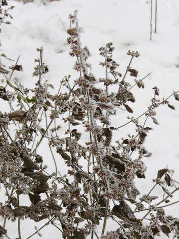 Plants in winter №38159