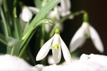 Spring flowers clip art №38302