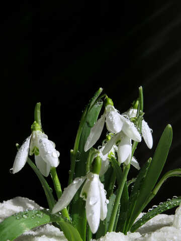 Spring flowers №38356