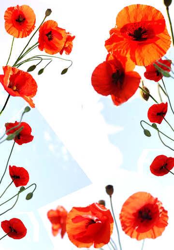 Cornice fiori №38205
