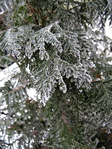 Winter tree №38172