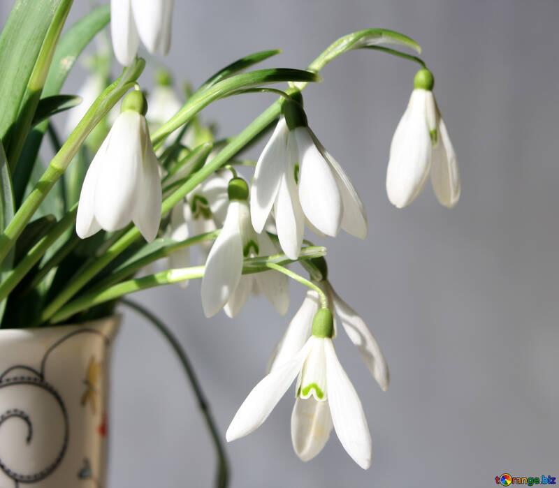 Цветы 8 марта №38348